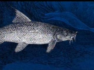 Pesca de lubina a jigging con vinilos