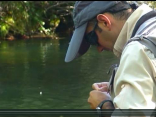 La pesca de la trucha en Quintaluengos,Palencia