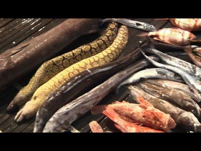 SPOT ESCUALO FISHING